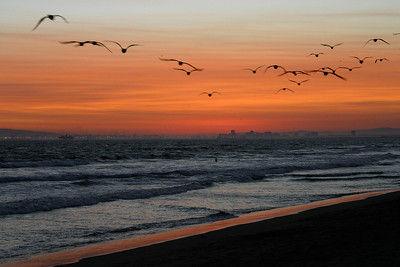 Flying Birds at Sunset - Long Beach, CA